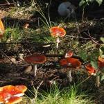 Pilze am Harzer BaudenSteig